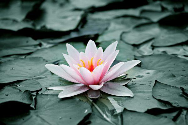 mindfulness y heartfulness pagina inicio